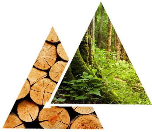Forestry FSC certified